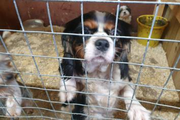 31 dogs and puppies rescued by Police in Coalisland