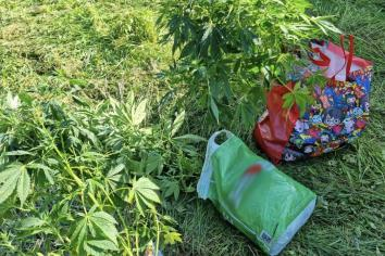 Cannabis plants left on road in Cookstown