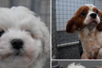 Rehoming of dogs seized from puppy farm